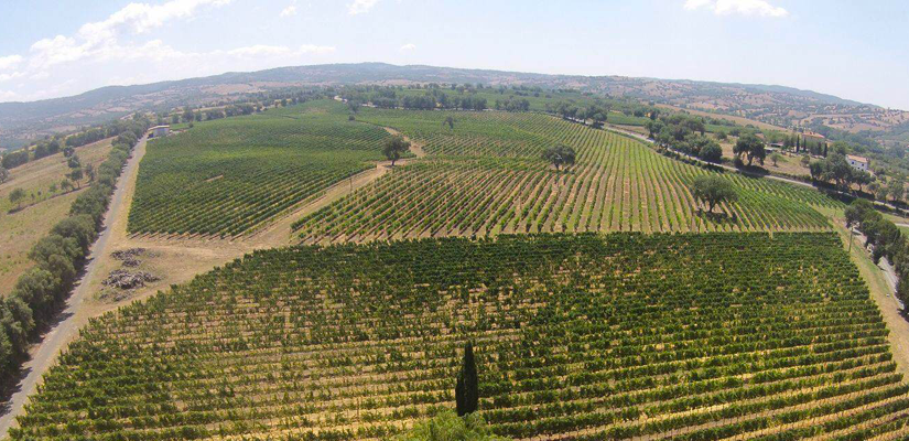 In Maremma, innovation in the vineyard and environmental sustainability