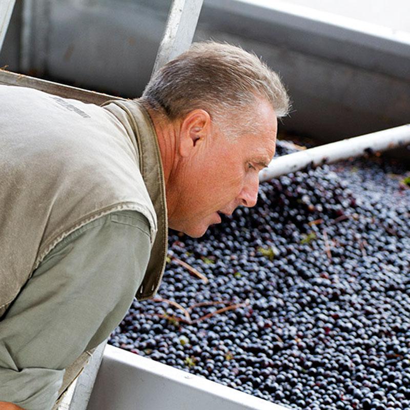 controllo delle uve